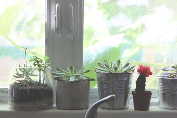 Succulents-on-kitchen-windowsill