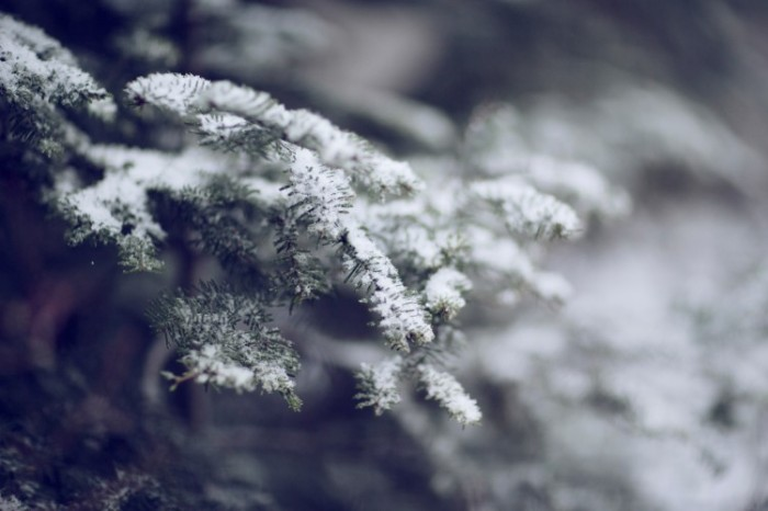 Kinfolk_Snow_Gifts_Web-120-750x500